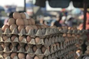 Proizvodnja jaja u svijetu: Kina najveći proizvođač, a Nizozemci ih najviše izvoze