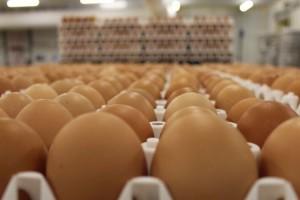 Lideri francuskog tržišta jaja nesilica iz slobodnog uzgoja