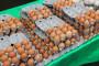 Vršit će se pojačane kontrole kod uvoza jaja