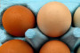 Jaja s dvorišta i jaja iz kaveza - ima li razlike u kvaliteti?