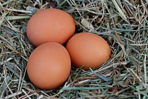 Slovenska čvrsta jaja dobila oznaku zaštićenog zemljopisnog podrijetla