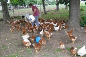 Ostala bez posla pa se posvetila poljoprivredi, uz koke Hrvatice danas ima povrtnice s eko certifikatom