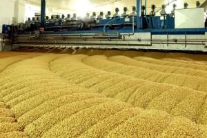 Bečki ječam za bečko pivo - proizvode ga na površini od 105 hektara