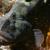 Majmunska jegulja bi mogla zamijeniti bijelo meso?