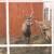 Za manje od godinu dana napravio mini zoo vrt - u planu i etno kuća