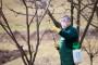 Jesenje prskanje - obavezna zaštita voćnjaka