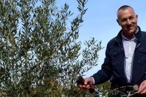 Maslinovo ulje Josip Kulaš prodaje i izbirljivim Istranima, sad je u fazi testiranja čaja od lišća masline