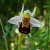 Znate li da orhideje najčešće rastu u simbiozi s gljivama?