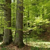 Kolektivna sadnja drveća: Probajte posaditi stare sorte voćaka i šumskih voćkarica