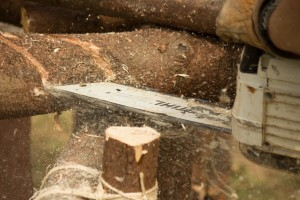 Hrvatske šume produžuju plaćanje drvnih proizvoda na 100 dana