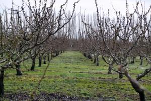 Proljetna gnojidba voćnjaka, vinograda i maslinika - obavite ju na vrijeme