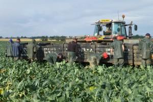 Poljoprivreda u opasnosti: Poljska zatvaranjem granica onemogućuje migraciju radne snage