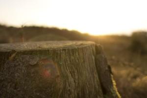 Izmjene i dopune Uredbe o zakupu šumskog zemljišta u vlasništvu RH