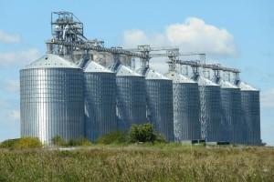 Rusija smanjuje kvote na izvoz žitarica?
