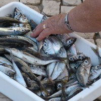 Izmjene i dopune Pravilnika o postupku vaganja proizvoda ribarstva
