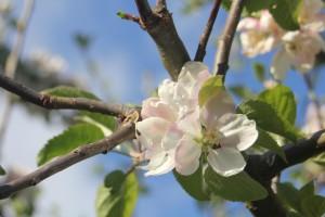 Branimir Markota: Prve procjene šteta na voću znat će se krajemtjedna
