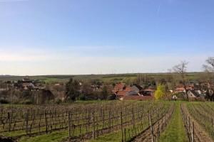 Međimurcima omogućeno nesmetano obilaženje vinograda u Mađarskoj