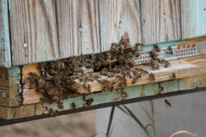 Pčelari, produžen je rok za podnošenje zahtjeva za sufinanciranje