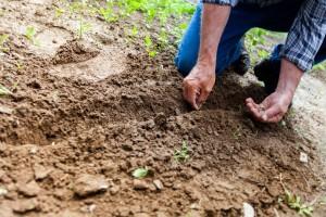 Poljoprivrednici u ovoj krizi najmanje brinu za svoju budućnost?