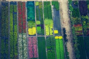 Sa 650 milijuna eura nadoknađuju štetu u cvjećarstvu, vrtlarstvu i uzgoju krumpira