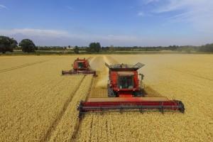 Raste svetska proizvodnja, potrošnja i snabdevanje pšenicom?