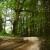 Nacrt prijedloga Uredbe o zakupu šumskog zemljišta u vlasništvu Republike Hrvatske