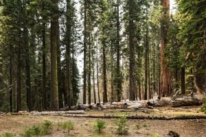 Otvoreno je savjetovanje o utvrđivanju naknada zakupa za šumu i šumsko zemljište