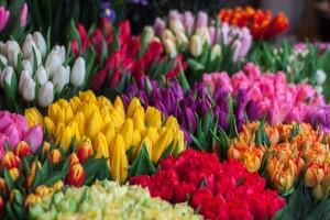Holandija zabeležila manji pad izvoza cveća u martu - Italija drastičan