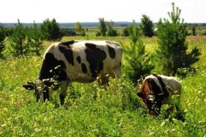 Prijavite se na program potpore za unaprjeđenje proizvodnog potencijala u stočarstvu