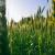 Poljoprivrednici, objavljen je natječaj za osiguranje usjeva, životinja i biljaka