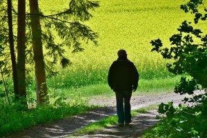 Uljana repica: Da li ćemo proizvesti biodizel koji raste na njivama?