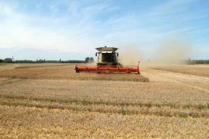 Rusija očekuje veće prinose pšenice, a Rumunija u problemu zbog kiše