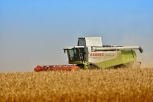 Kreće žetva pšenice, cena još uvek nepoznata?