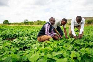 Saradnja Afričke i Evropske unije: Sigurnije tržište i snabdevanje hranom