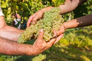 Dunavskim putem vina za promociju proizvođača iz regije Bač - Kiškun