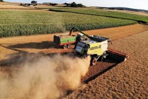 Počela žetva pšenice, a koja je cena?