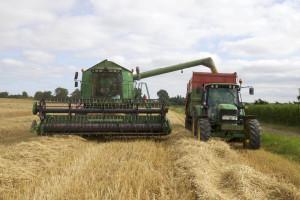Jakopović: Moramo pronaći model kojim ćemo zadržati domaću proizvodnju uljane repice