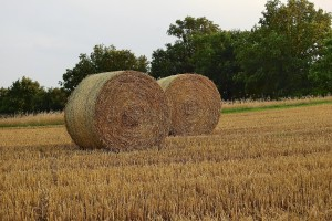 Treba li novi ministar poljoprivrede biti Slavonac i iz agronomske struke?
