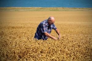 Nakon požara i trogodišnje suše, obilna kiša povećala prinose pšenice u Australiji