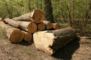 Pala proizvodnja šumskih sortimenata u drugom kvartalu 2020.