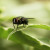 Riješite se muha na prirodan i jednostavan način
