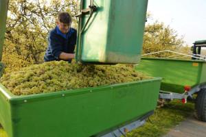 Francuska proizvela više vina nego lani