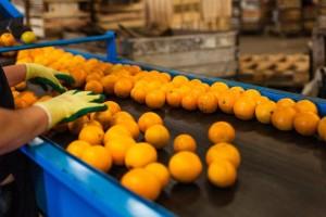 Turska nema ograničenja na izvoz agruma