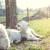 Užas na pruzi: Lokomotiva naletjela na stado ovaca, desetak odmah stradalo