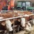 HID broj: Kako promeniti vlasništvo nad domaćim životinjama?