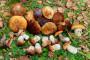 Podsticaji za uzgoj prepelica, riba, gljiva i konja