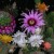 U kolekciji ih Slađana ima 4.000, a što je potrebno za uzgoj kaktusa?