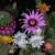 Cvetanje kaktusa i sve ono što niste znali o pravilnoj nezi ovih biljaka