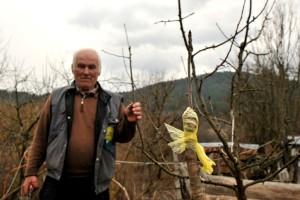 Dragoljub Papić: Voće se oplemenjuje kalemljenjem, a sada je pravo vrijeme za to