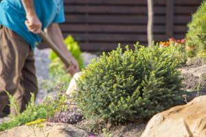Jednostavnim tehnikama uredite kamenjar u svom vrtu
